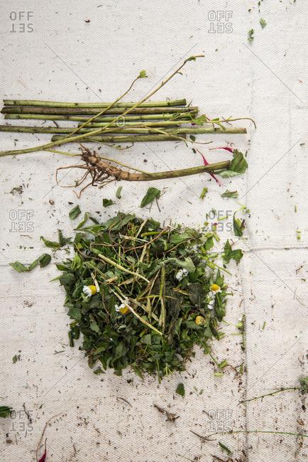 Fresh herb leaves in pile