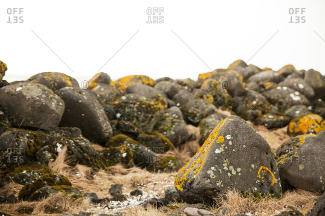 Pile of rocks covered in patches of yellow lichen on a hill