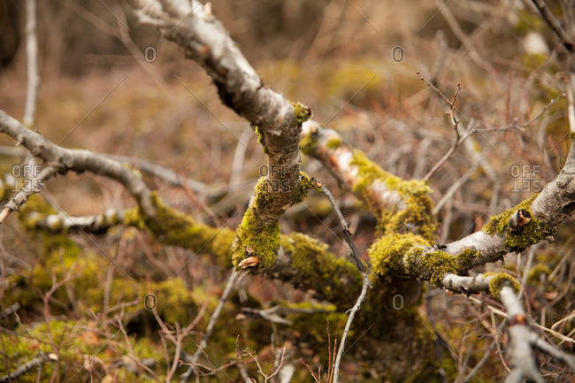 Close-up of moss-covered branches in a field