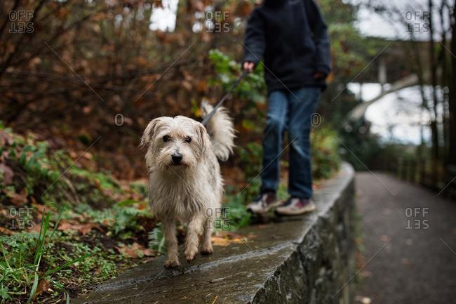 Dog on walk on ledge in rural setting