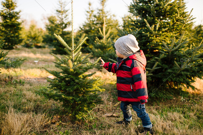Toddler touching a pine tree on a Christmas tree farm
