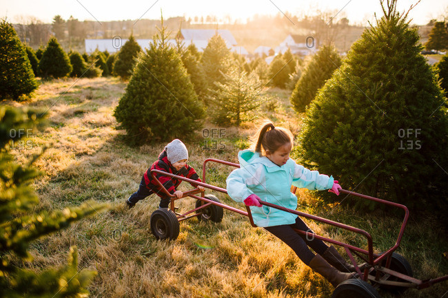 Toddler pushing sister on a cart on a Christmas tree farm