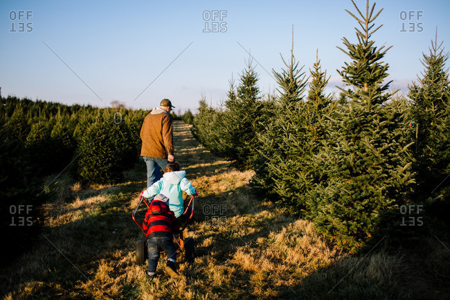 Toddler pushing sister on a cart behind a man on a Christmas tree farm