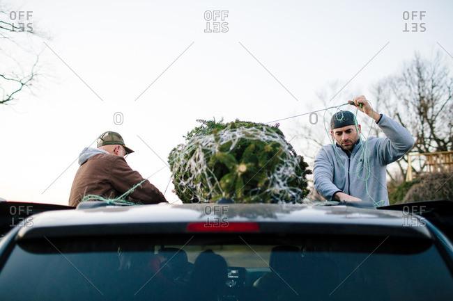 Men tying fresh cut Christmas tree onto a the top of a minivan