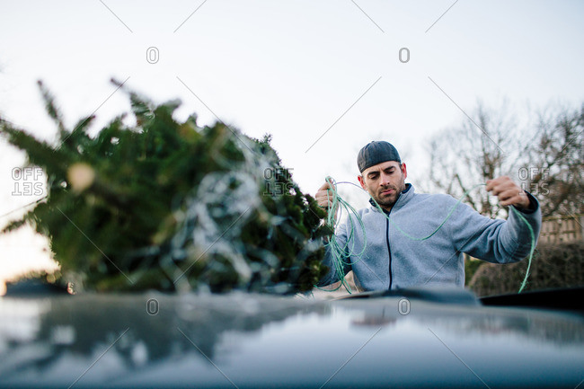 Man tying a Christmas tree onto a the top of a minivan