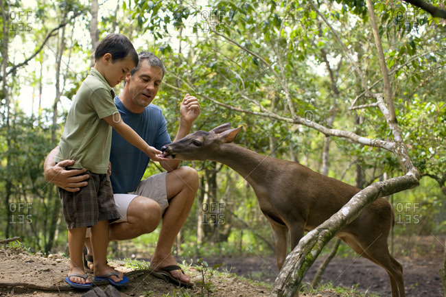 Father and son feeding a deer in the forest.