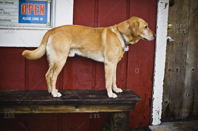 Dog standing outside a shop.