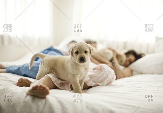 Couple on their bed with their two puppies.