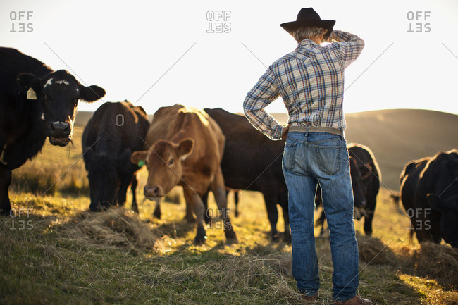 Rancher looking out over his cattle field.