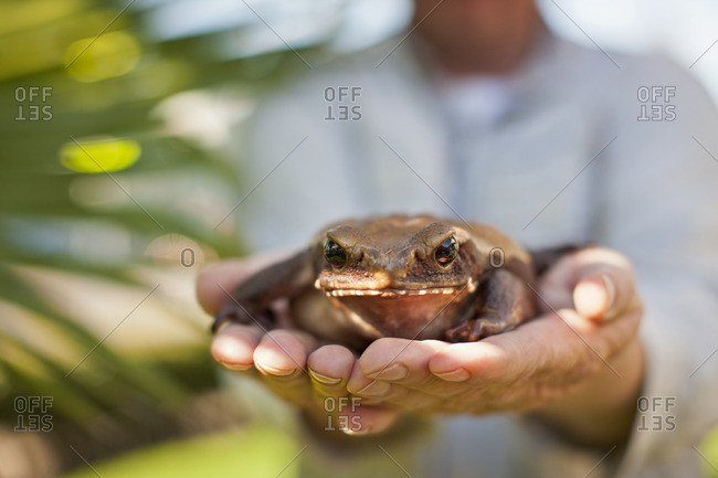 Person holding a brown frog.