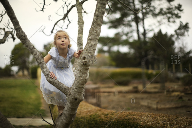 Young girl climbing a tree.