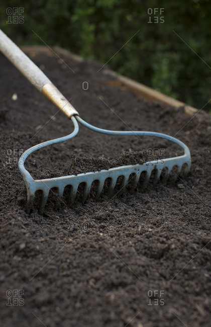 A garden rake in fresh soil