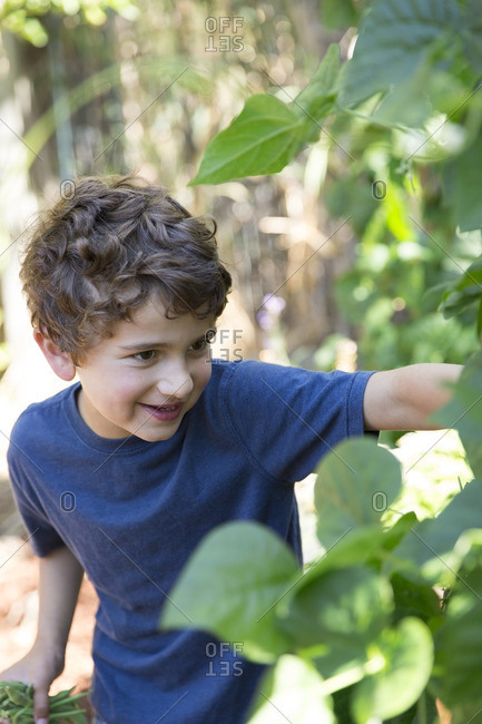 Boy picking greenbeans