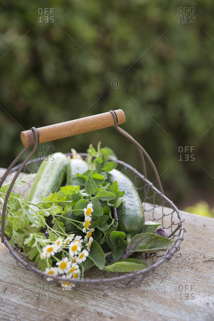 Garden basket filled with herbs and vegetables