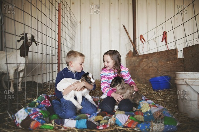 Kids with baby goats in barn