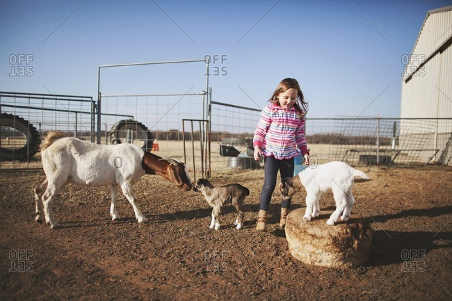 Girl by goats in a pasture
