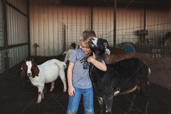 Boy hugging a goat in barn