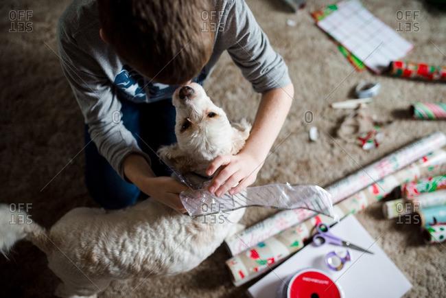Dog with Christmas ribbon and boy
