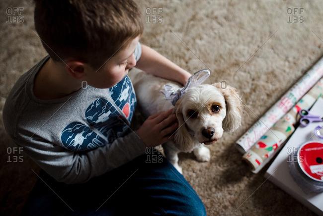Boy putting a Christmas ribbon on dog