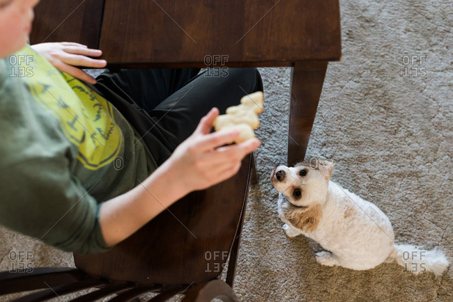 Boy teasing dog with a cookie