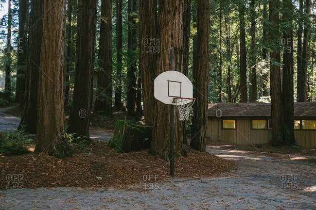 Basketball hoop in forest campgrounds
