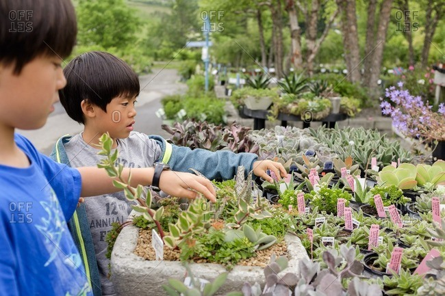 Two boys touching plants for sale at a garden center