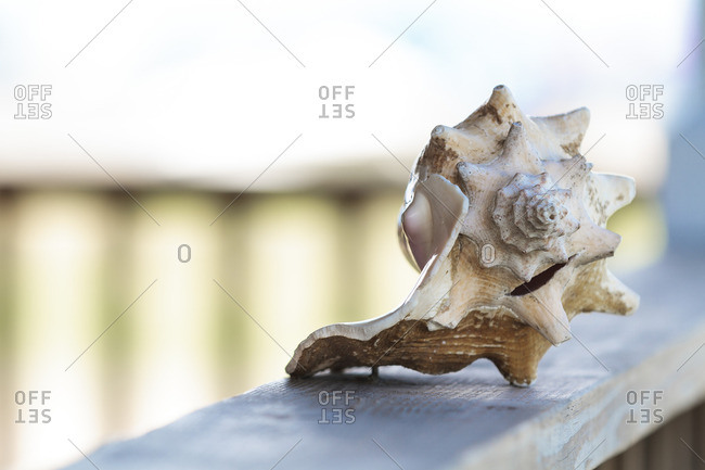 Seashell on a wooden railing