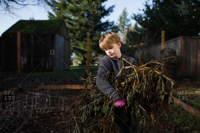 Boy carrying dead plants from a garden