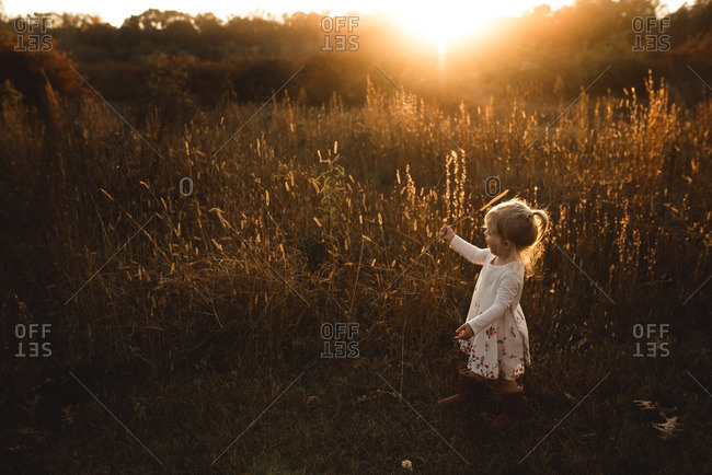 Toddler girl in a wheat field at sunset