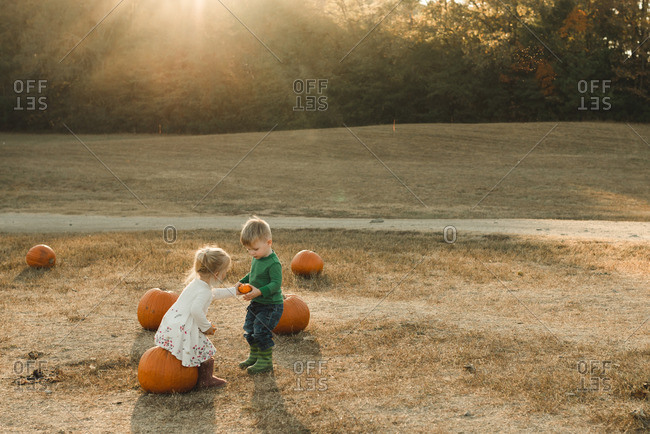 Children looking for pumpkins in a field