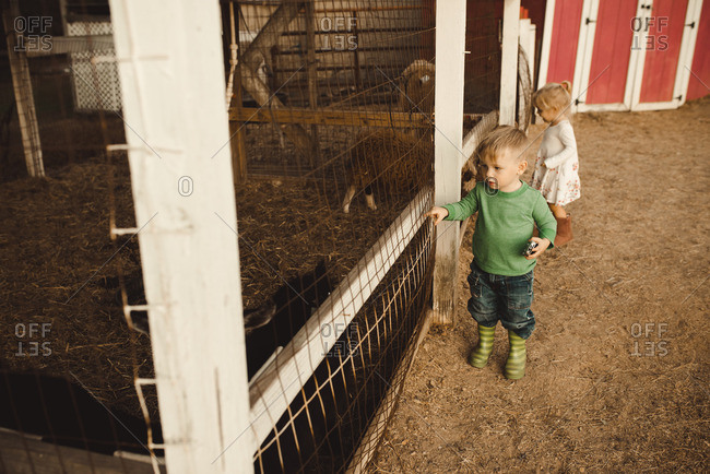 Two toddlers looking at animals in a barn