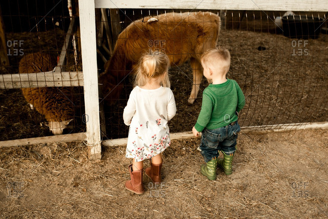 Two toddlers looking at animals on a farm