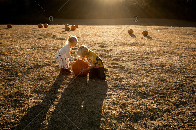 Children picking pumpkin from a field