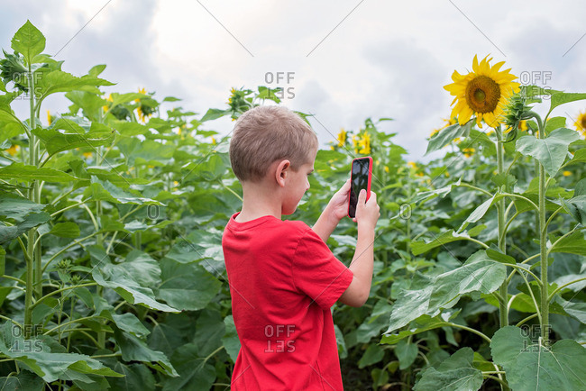 Boy taking a picture of a sunflower with a phone