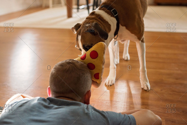 Man playing with dog and stuffed pizza