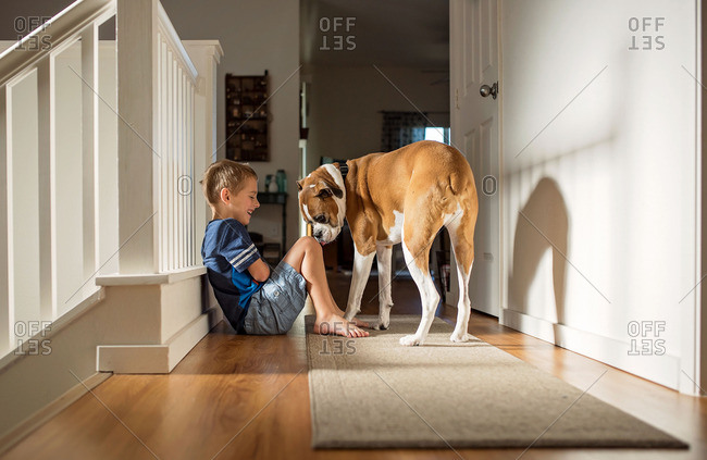 Boy playing with large dog indoors