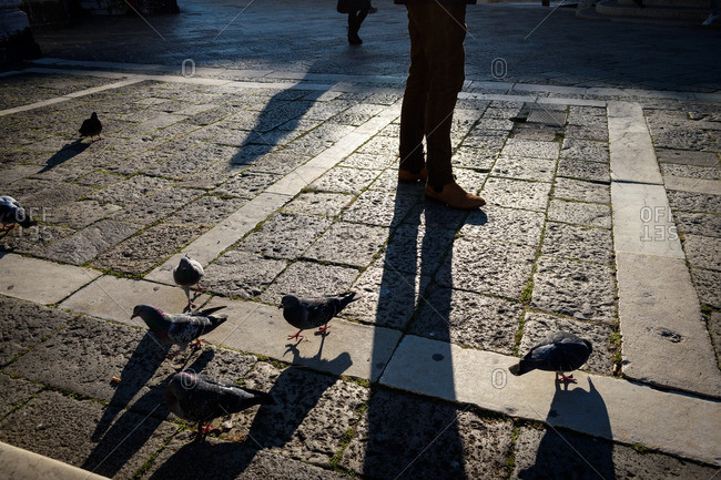 Pigeons and person in shadow, Venice, Italy