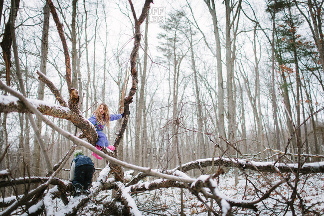 Kids climbing trees in winter