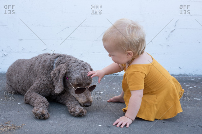 Toddler girl petting a dog wearing sunglasses