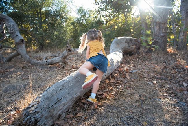 Little girl climbing on a fallen log in a forest