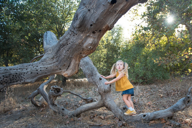 Little girl climbing on the branches of a fallen tree