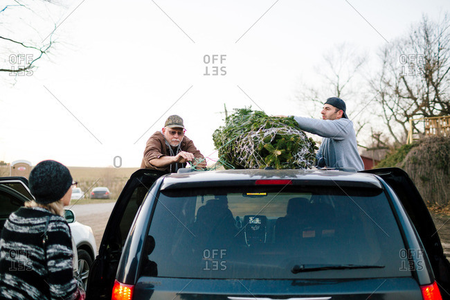 Woman watches men tie Christmas tree to roof of vehicle
