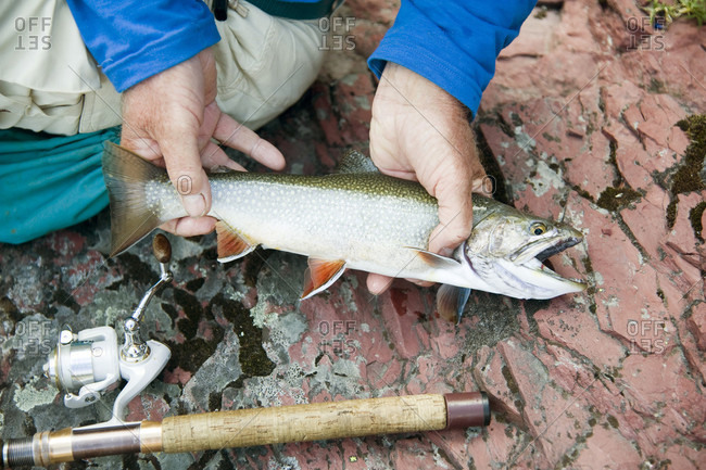 Close-up Of Man Holding Brook Trout Caught In Glacier National Park, Usa