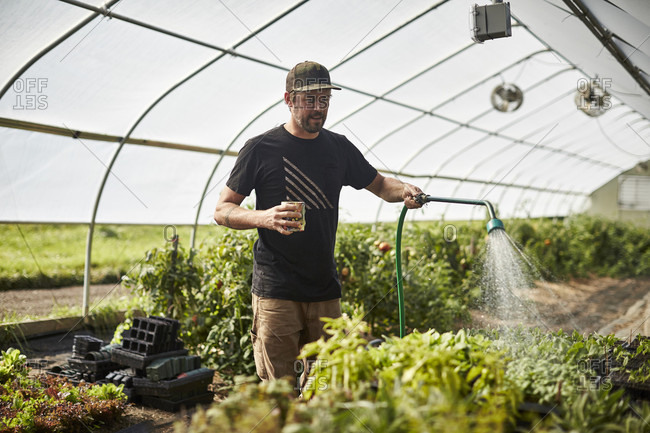 A Farmer Waters Plants In His Greenhouse