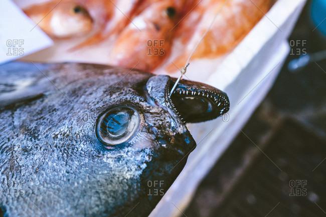 Fresh Catch In The Fish Catania Market, Sicily