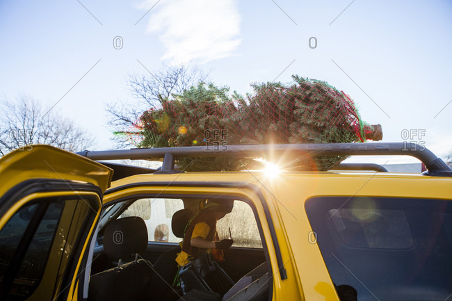 A Christmas Tree Is Loaded On Car While A Young Boy Stands In The Back Seat