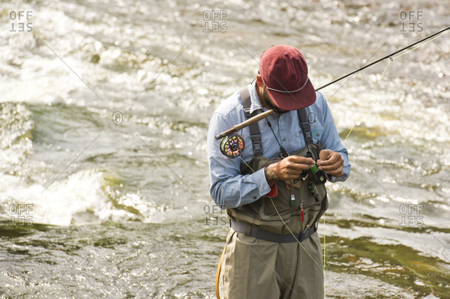 A Fisherman Fixes His Line While Holding His Fly Rod In His Mouth And Standing In The Yampa River