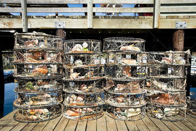 Crab Pots On A Dock In Harbor On San Juan Islands, Washington, Usa