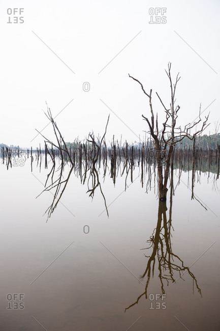 Reflection Of Drained Trees In Lake At Laos