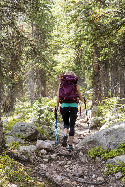 A Female Hiker Hiking On A Forest Trail In Rocky Mountain National Park, Colorado